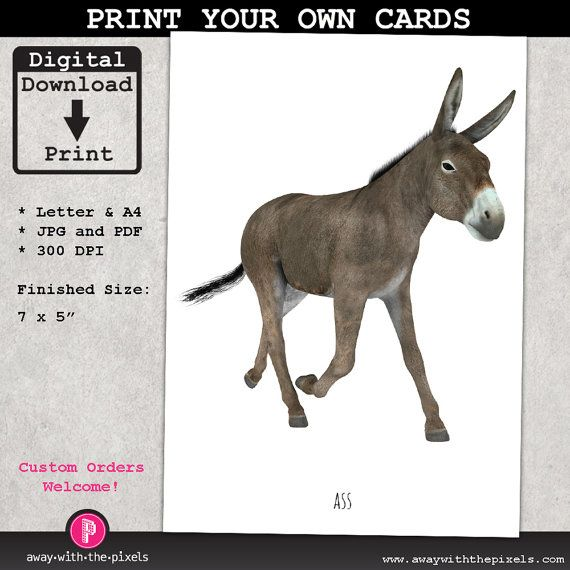 Funny Greeting Card to Print, With the Word Ass and a Picture of an Ass (donkey), Instant Download, Printable PDF JPG , birthday card,
