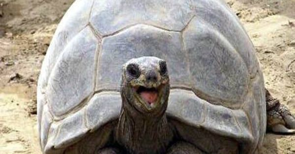 Happy turtle, Happy and Turtles on Pinterest