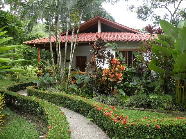 Hotel La Palapa Ecolodge Resort | Ixora hedge & large Calathea lutea on the right.