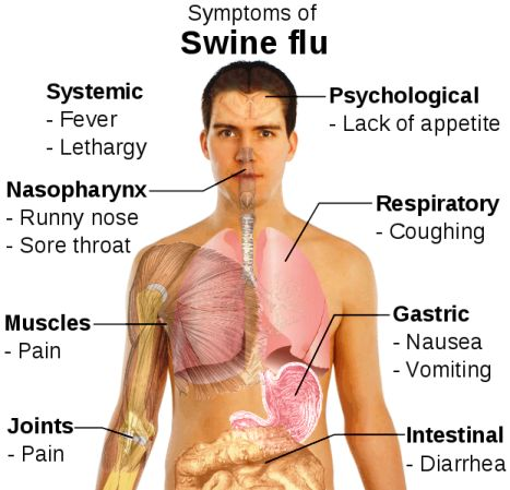 Symptoms of H1N1 & What We Can Do To Minimize The Spread Of H1N1