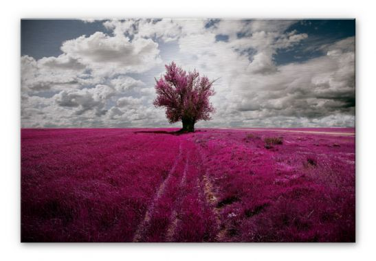 Stampe su Alu-Dibond - Stampa su Alu-Dibond - L'albero solitario