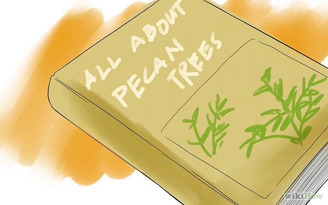 Grow Pecan Trees