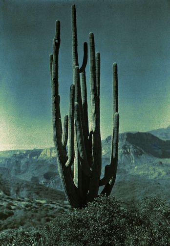 the desert  .