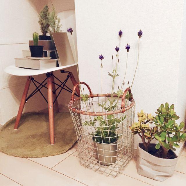 vivaawesomedayさんの、リビング,観葉植物,ナチュラル,IKEA,かご,北欧,多肉植物,ラベンダー,Muji,ワイヤーバスケット,TODAY'S SPECIAL,Eames Chair,foundmuji,のお部屋写真
