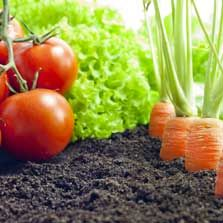 Online Organic Gardening Instruction | Growing your own organic food in an environmentally friendly and sustainable manner is becoming a very popular activity. However, many people hesitate at