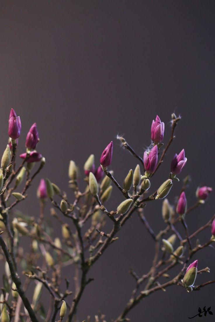 KUKKALA #formex #magnolia