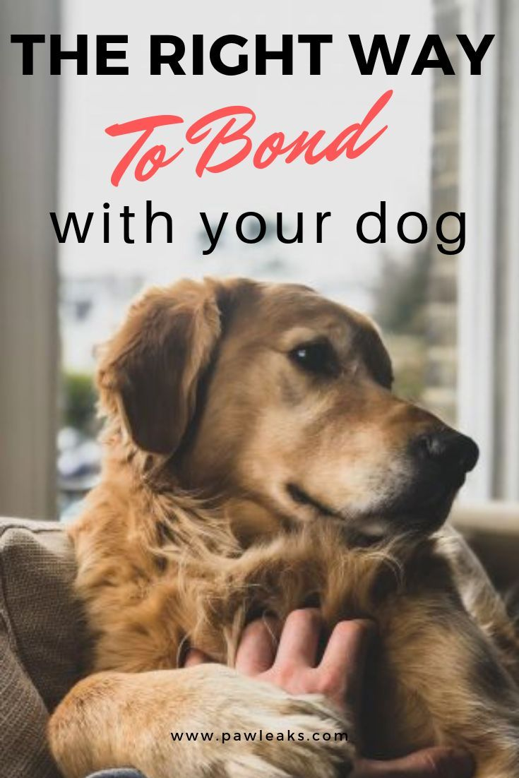 How To Bond With Your Dog Dog Training Dogs Dog Care Tips
