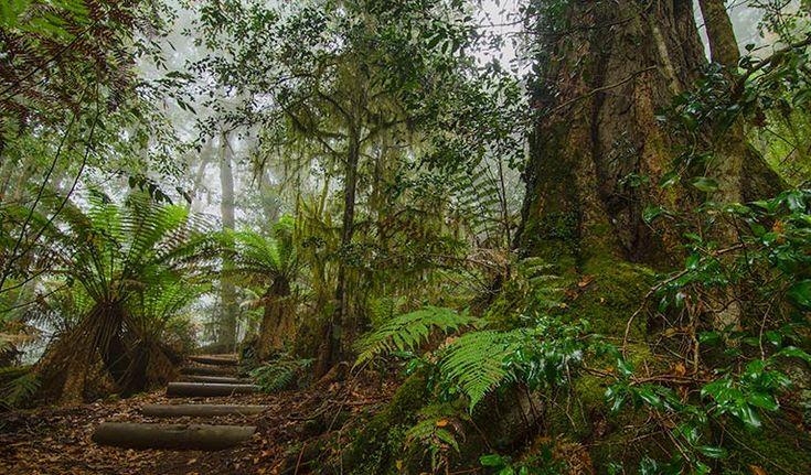 Honeysuckle Forest track, Barrington Tops National Park. Photo: John Spencer/NSW Government