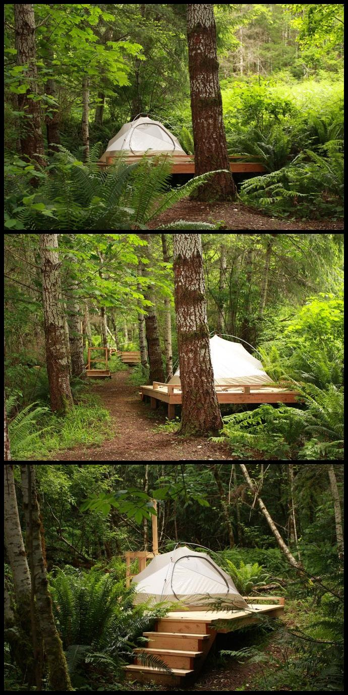 Camping platform - build it back behind the house. (This is at Harmony Hill on the Olympic peninsula.) Pretty much the same type of forest we got goin' on out back of the house.  Except it's more swampy. ...And there's probably more bugs. ...And not really anything resembling a trail.  :P