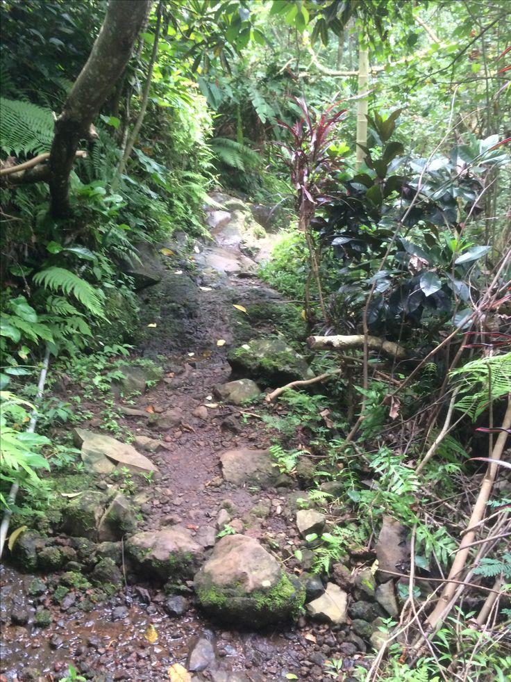 pathway leading to aling aling waterfall, bali