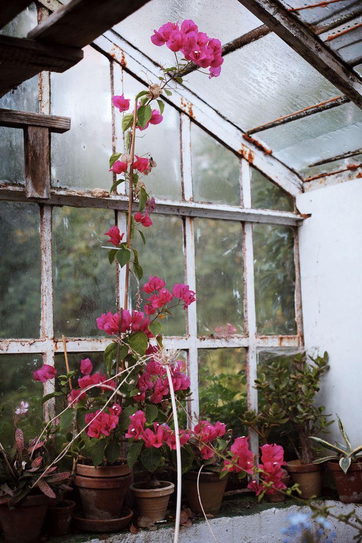 Garden by Ula Fiedorowicz