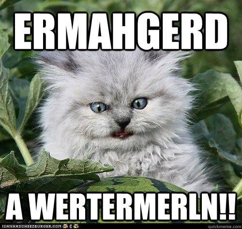 17 Best images about Ermahgerd... on Pinterest | Alex ...