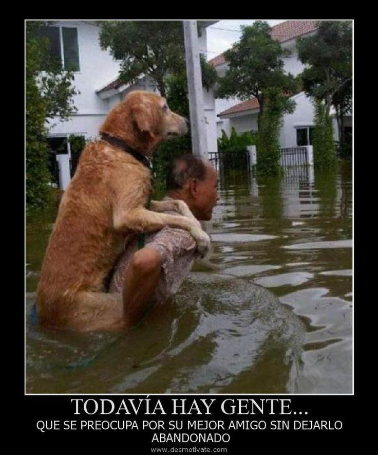 Yo lo haría, ya que el perro es el único animal, incluyendo a las personas, que…
