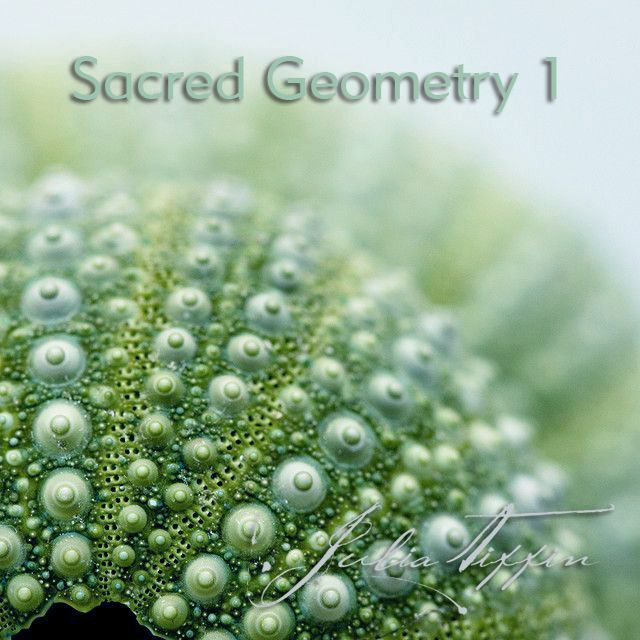 Learn sacred tools that will improve your space and bring the sacred right back into all areas of your life. Learn key concepts that have been guarded by the Mystery Schools for thousands of years! http://juliatiffin.com #returntothesacred