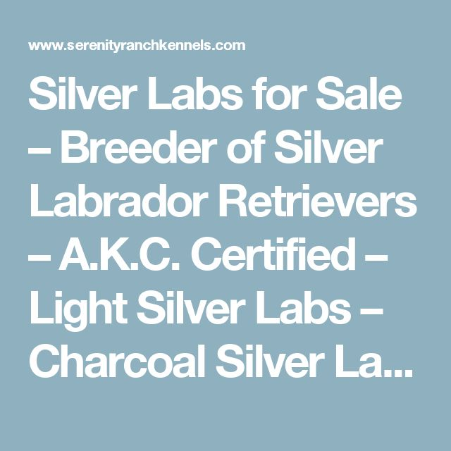 Silver Labs for Sale – Breeder of Silver Labrador Retrievers – A.K.C. Certified – Light Silver Labs – Charcoal Silver Labs – Black Labs – Chocolate Labs