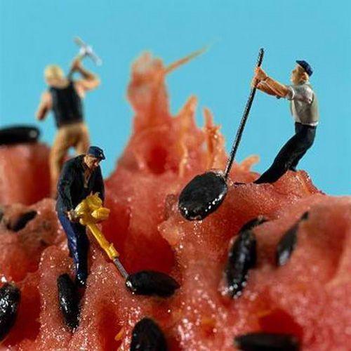 Worker Seed Watermelon Landscape