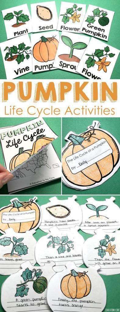 Integrate Science, Literacy and Writing by reading about the Pumpkin Life Cycle. This unit includes vocabulary activities, graphic organizers, an interactive pumpkin book, and a mini book. I have also includedtwo Interactive Notebook Pieces and a Numbe