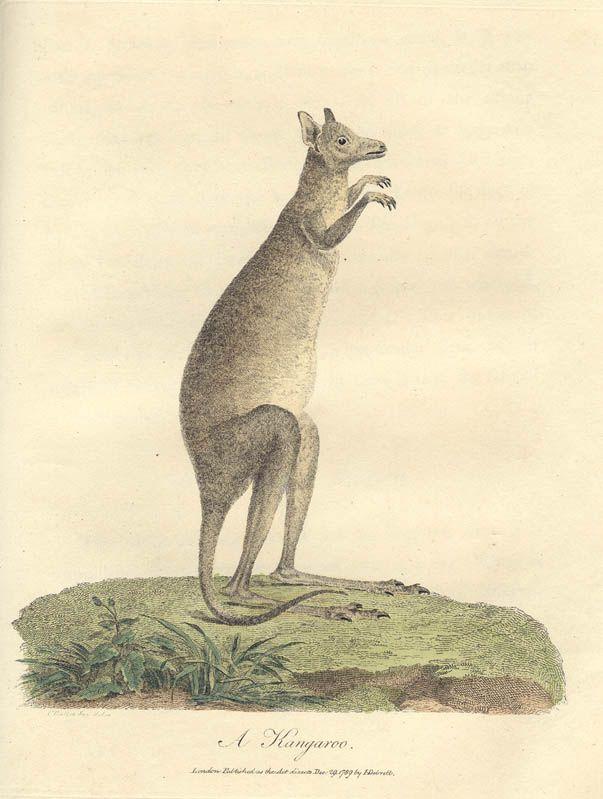 Australian History Links