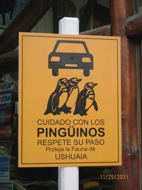 Em Ushuaia, Argentina, você tem que respeitar os pinguins. #Viagem #argentinatotal                                                                                                                                                      Mais