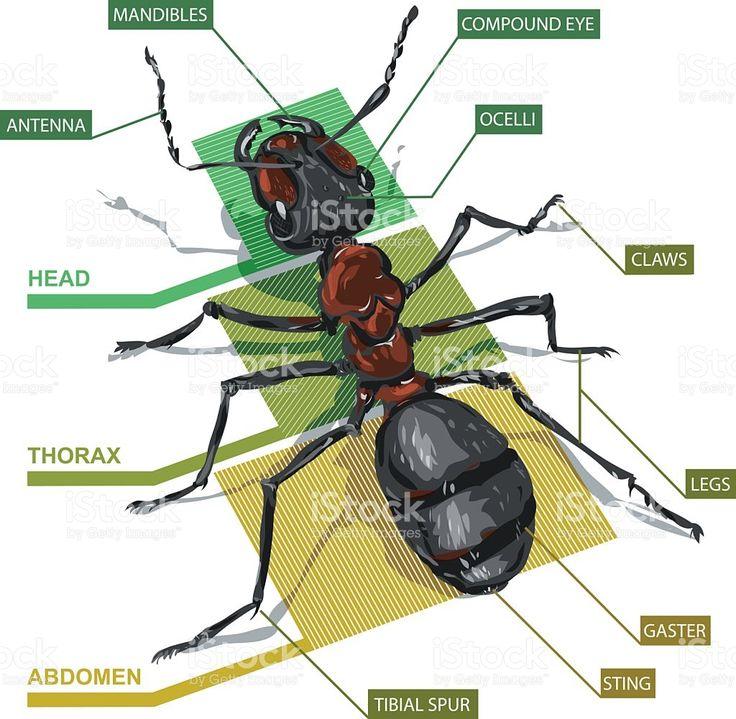 36 best amazing ants images on pinterest. Black Bedroom Furniture Sets. Home Design Ideas
