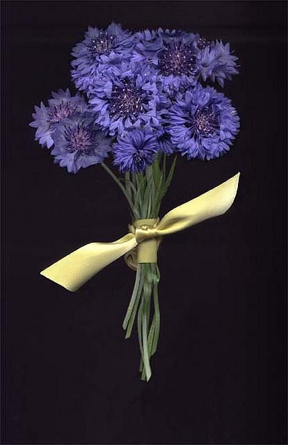 Bridal bouquet - blue cornflowers