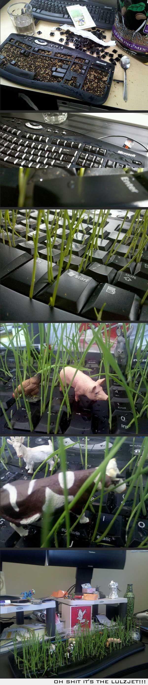 Planting a garden in a keyboard. Best office prank idea!