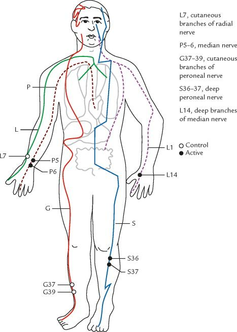 Acupuncture Meridian Chart