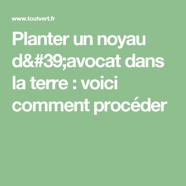 best 25 planter noyau avocat ideas on pinterest noyau avocat noyau avocat and noyau avocat. Black Bedroom Furniture Sets. Home Design Ideas