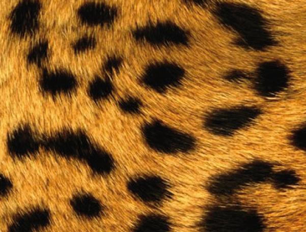 Leopard II - Blackberry 8300
