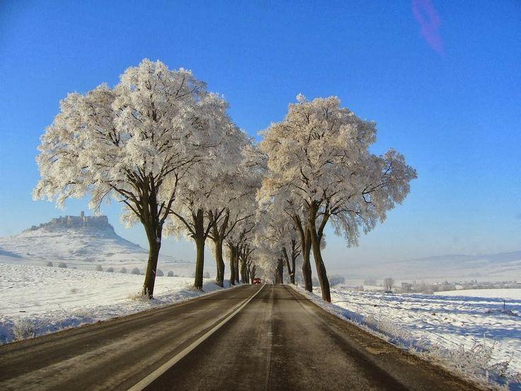 Trees, road, snow, landscape, (Kosice, Slovakia)