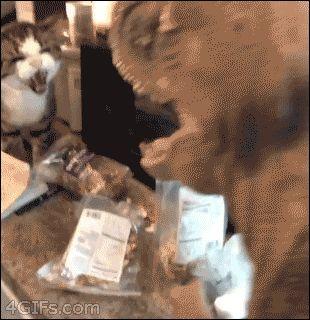 Gato X Dinossauro
