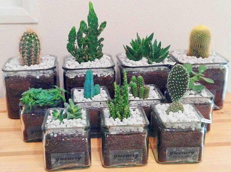 Succulents in jars! #greenery #greeneryartofplants #cactus #succulents #jar #chania #crete