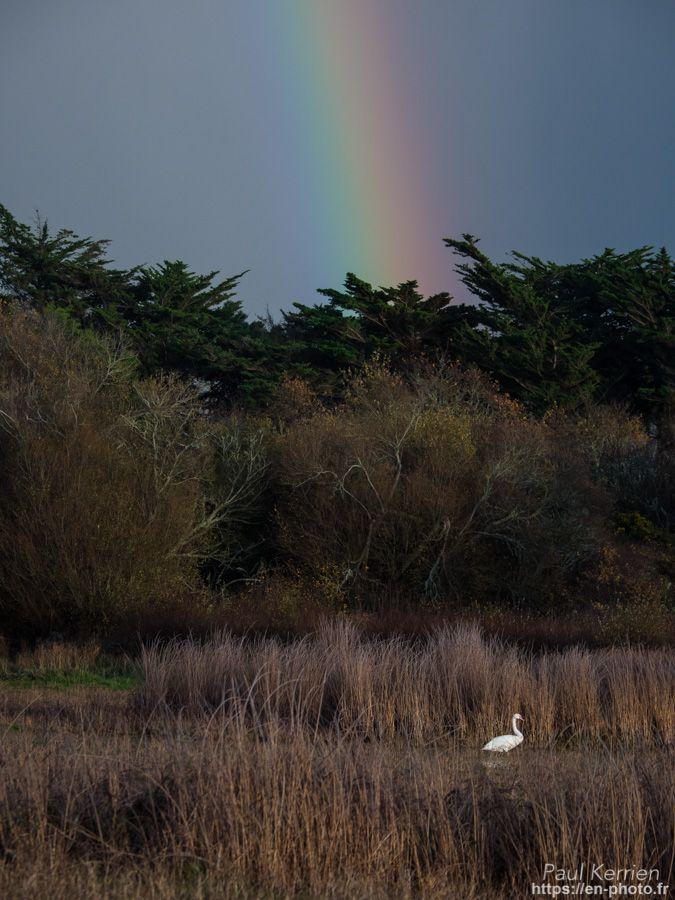 décembre 2017 | près de l'étang de Loc'h ar Guer - cygnes et arc-en-ciel  - à Trégunc  © Paul Kerrien 2017 https://en-photo.fr Finistère Bretagne