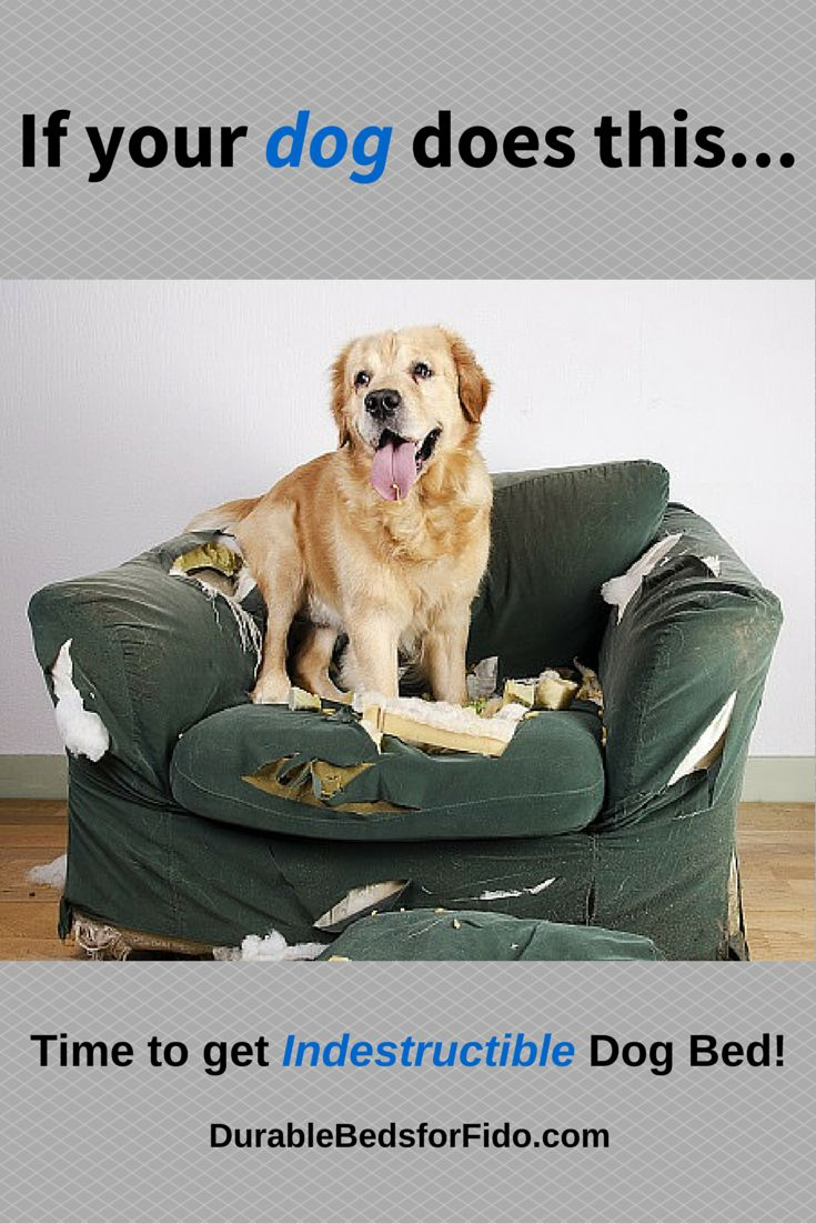 Dogs that like to chew and destroy their dog beds need an indestructible dog bed! Visit www.durablebedsforfido.com for reviews on the top durable dog beds.