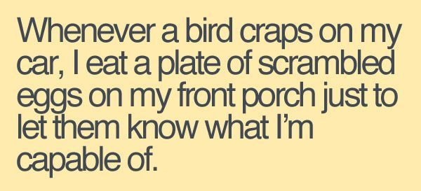 Whenever a bird craps on my car...: Like A Boss, Laughing, Food Chains, Scrambled Eggs, Giggl, Funny Quotes, Funny Stuff, Birds, Front Porches