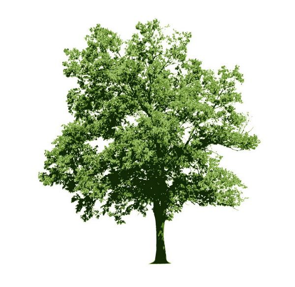 Tree Vector Images, http://hative.com/tree-vector-images/,