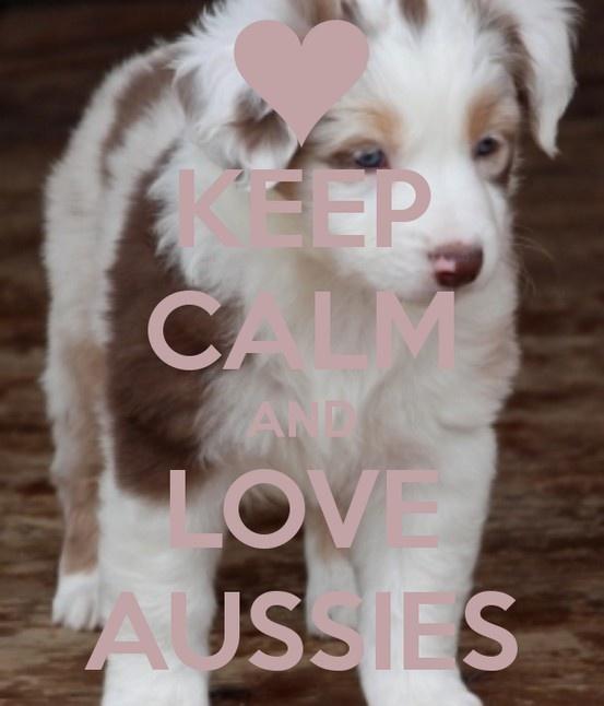 KEEP CALM AND LOVE AUSSIES