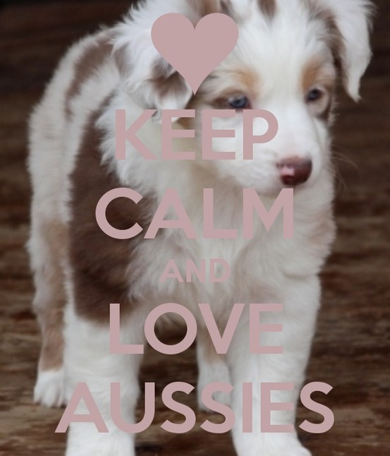 KEEP CALM AND LOVE AUSSIES