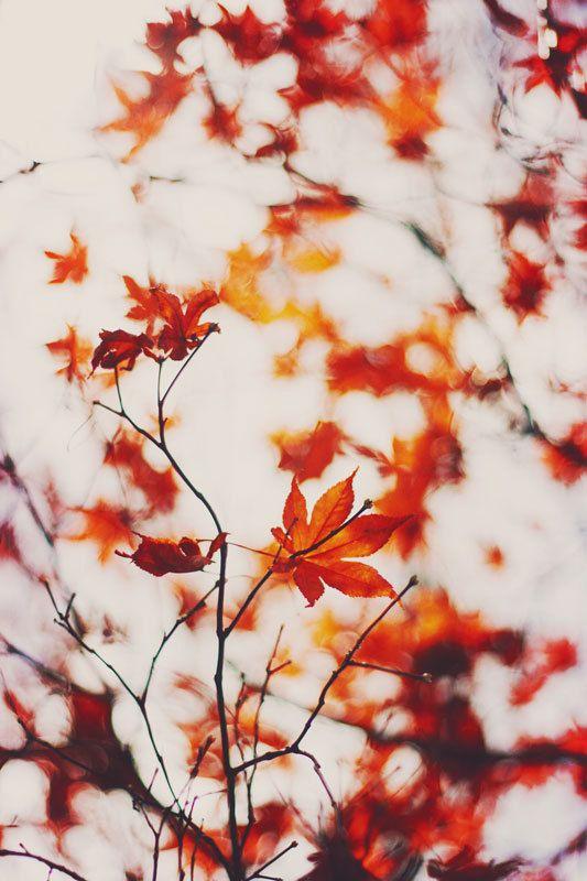 Naturfotografie, Herbstdekor, Orange Wandkunst, Baumfotografie, zartes Foto, Zweige, Kunstfotografie, helles buntes Foto