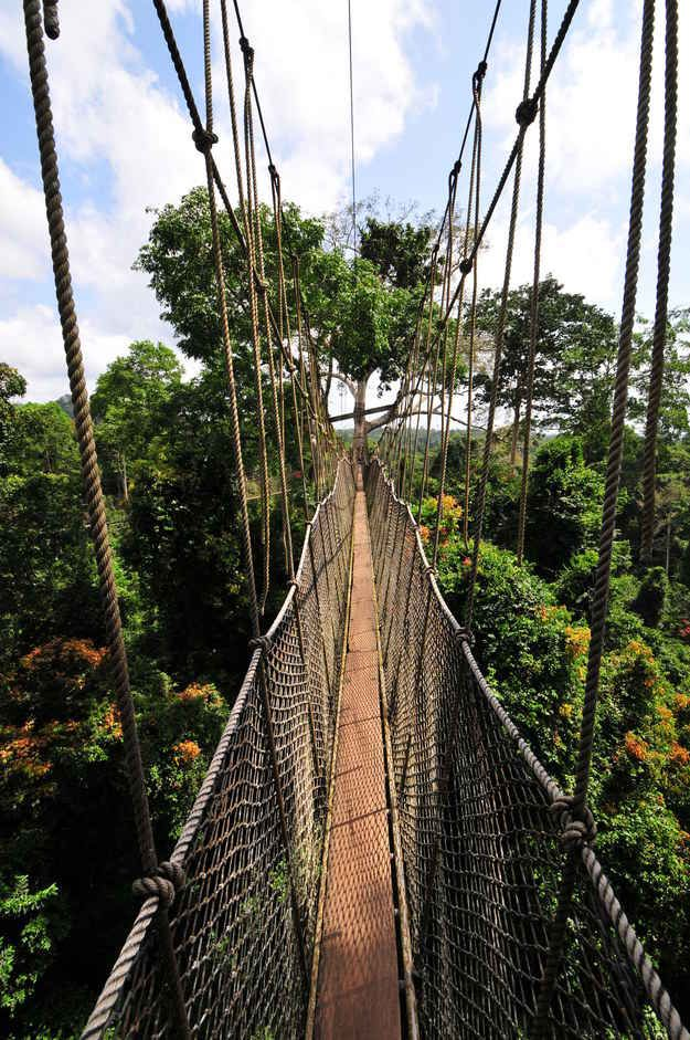 Walk the Kakum canopy in Ghana. | 41 Adventures To Add To Your Bucket List