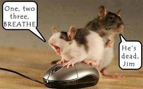 Pinterest Jokes: Mouse CPR... Nurse Humor