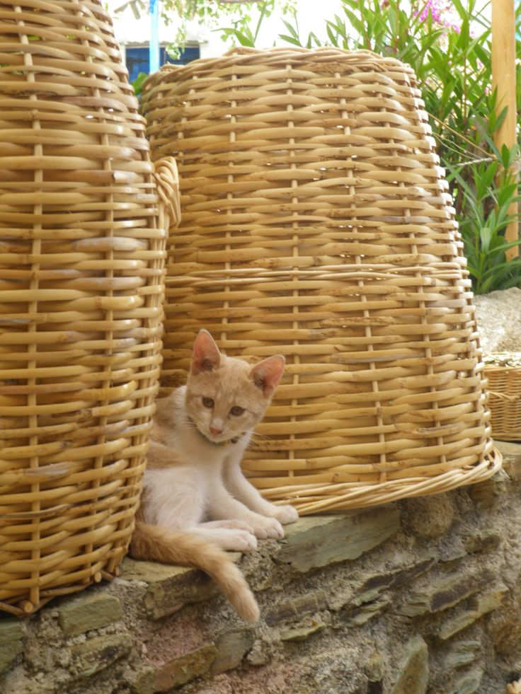 Cat in Volax, Tinos Island