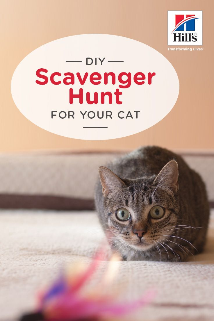 Hiding Treats Around Your Home For A Scavenger Hunt Is A Great Way To Keep Your Cat On Her Toes She Ll Love Searching For Th Cats Pet Health Care Cat Activity