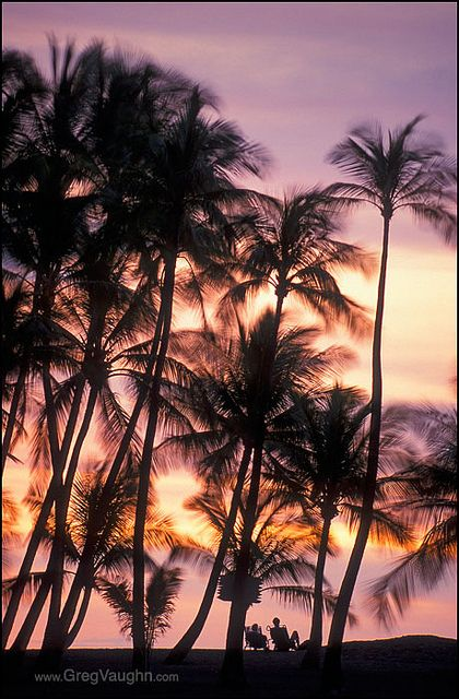 Hilton Waikoloa Big Island Hawaii: Sunset. Watch the locals run to light the torches around the property at sunset