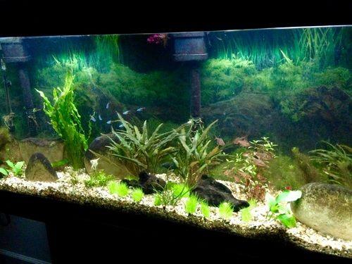 aquarium aquarium aquarium decor aquarium plants diagnosing problems ...