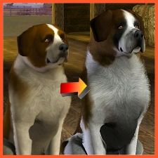 This Sims 3 pets download looks like a real St. Bernard.