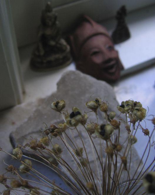 Allium gravestone. MaW