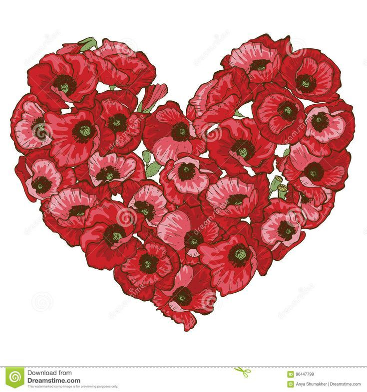 Heart of red poppy flowers isolated on white background