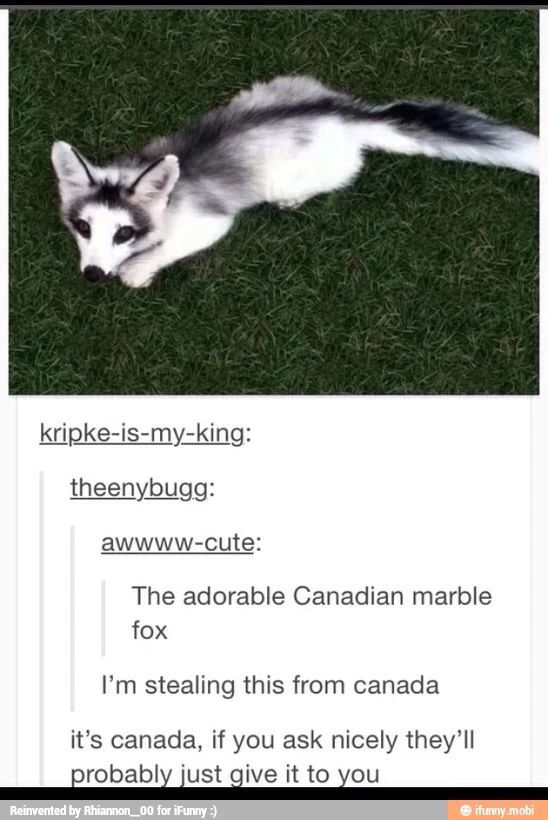 Give me the Canadian fox! – #canadian #Fox #give