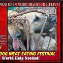 Please consider contributing to our crowdfunding campaign to provide emergency aid to dogs rescued in Yulin:   change.org/helpyulindogs      Did you know, every year,  on the summer solstice, thousands of dogs are rounded up to be eaten in Yulin, China as part of a Dog Meat Festival?  We believe that...